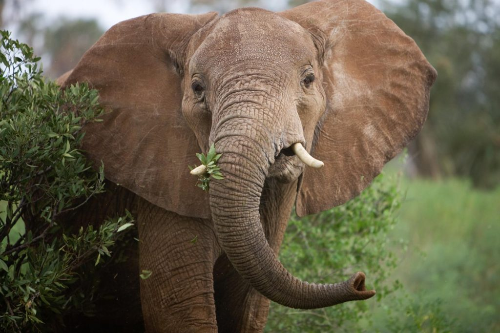 US Authorities Remove Restrictions on African Elephant Trophy Import